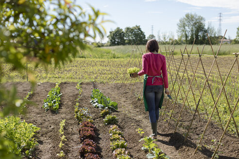 Woman working in her vegetable garden, Italy - MAUF02462