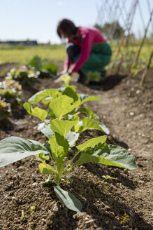 Woman working on her Vegetable Garden. Italy. - MAUF02468