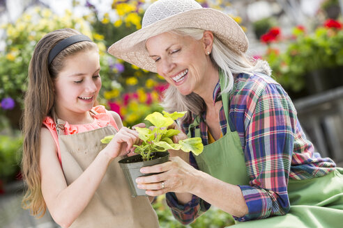 Caucasian grandmother and granddaughter holding potted plant in greenhouse - BLEF05001