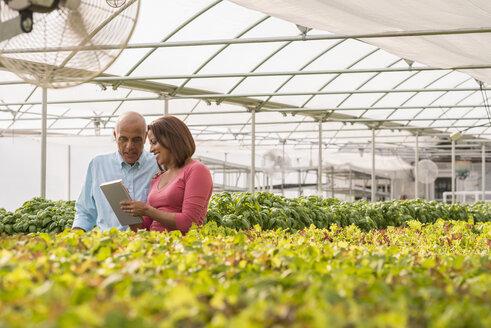 Couple reading clipboard near green plants in greenhouse - BLEF05463