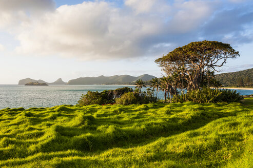 Green meadow at sunset on Lord Howe Island, New South Wales, Australia - RUNF02181