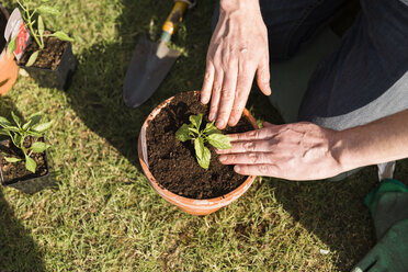 Close-up of man planting seedling - NMS00323
