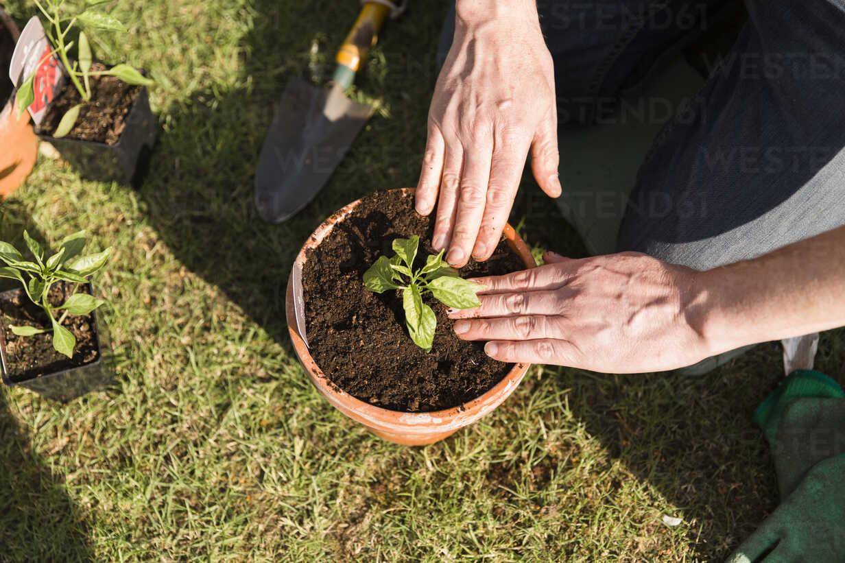 Close-up of man planting seedling - NMS00323 - Nicole Matthews/Westend61