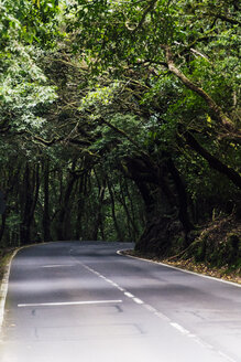 Road in forest, Tenerife, Spain - CHPF00533