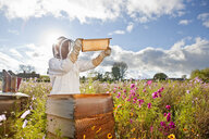 Beekeeper, holding beehive frame of honey up to the sun, in field full of flowers - JUIF01198