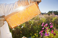 Beekeeper, holding beehive frame of honey up to the sun, in field full of flowers - JUIF01201