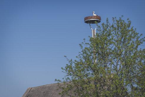 Stork's nest, Wahrenberg, Saxony-Anhalt, Germany - KEBF01234
