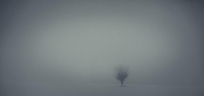 Single tree at hazy winter landscape - ANHF00125
