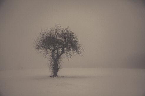 Single tree in winter landscape - ANHF00137