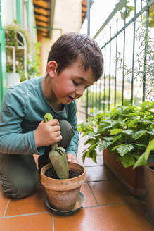 Little boy gardening on balcony - MGIF00533