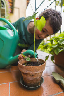 Little boy watering potted plant on balcony - MGIF00536