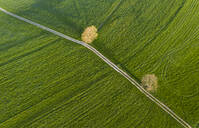 Aerial view over meadow with dirt track and trees, Holzhausen, Bavaria, Germany - LHF00648