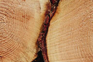 Sawn ends of timber logs, cut wood, with wood grain pattern. - MINF11427