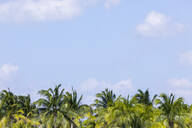 Palm trees and blue sky with clouds, Holbox, Yucatan, Mexico - MMAF00955