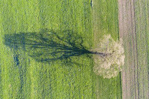 Aerial view of oak tree on meadow, shadow - SIEF08676