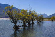 Row of trees in the water of Lake Wakaipu, Glenorchy around Queenstown, South Island, New Zealand - RUNF02681