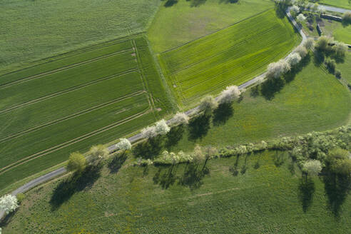 Aerial view of rural road with white blossoming trees and agricultural fields, Franconia, Bavaria, Germany - RUEF02232