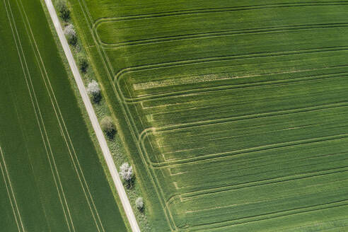 Abstract aerial view of rural road lined with trees and green agricultural fields, springtime, Franconia, Bavaria, Germany - RUEF02244
