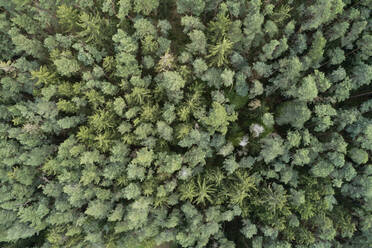Aerial view of forest with pine trees from above in early springtime, Franconia, Bavaria, Germany - RUEF02247