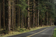 Forest trees along rural road - MINF12142
