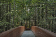 Footbridge in Redwood National Park, California, United States - MINF12166