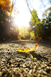 Close up of autumn leaf on dirt path - MINF12302
