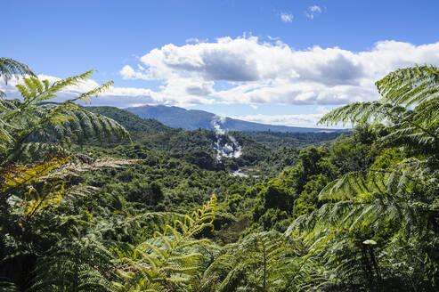Geothermal acitve field in the Waimangu Volcanic Rift Valley, North Island, New Zealand - RUNF02711