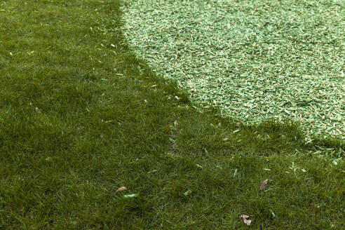 Grass and green wood shavings - TCF06104