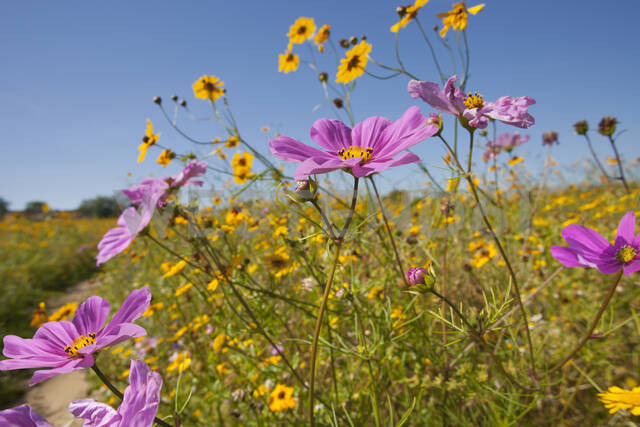 Close up of wildflowers in sunny meadow - JUIF01516