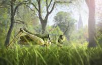 Illustration of cricket in grass - BLEF07478