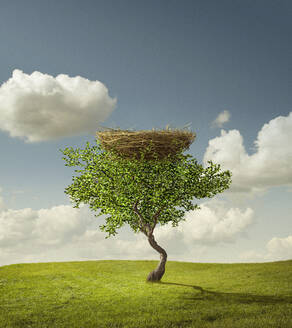 Empty bird's nest in tree - BLEF07496
