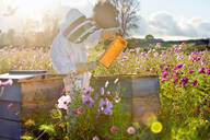 Beekeeper checking honey on beehive frame in field full of flowers - JUIF01545