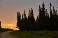 Silhouetted trees in countryside, Chicken, Alaska, United States - ISF21646
