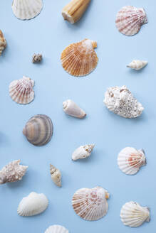 Sea shells on blue background - MOMF00708