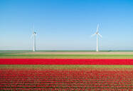 Wind turbines on dyke, fields with tulips in the foreground, elevated view, Top, Flevoland, Netherlands - CUF51614