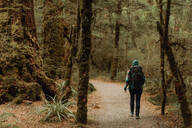 Hiker exploring forest, Queenstown, Canterbury, New Zealand - ISF21891