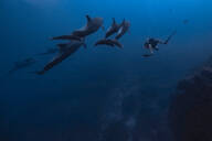 Man diving with dolphins, Revillagigedo Islands, Socorro, Baja California, Mexico - ISF21975