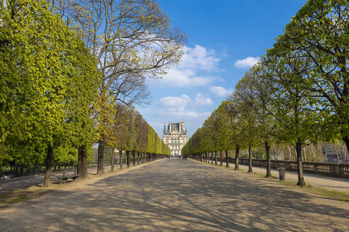 Scenic view of tree lined Jardin des Tuileries and Louvre Museum, Paris, France - CUF52474