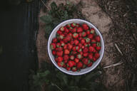 Directly above shot of red ripe strawberries in bowl on table - OGF00001