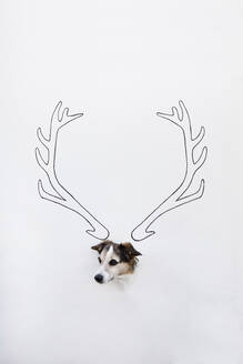 Portrait of mongrel with drawn deer antler on white ground - PSTF00428