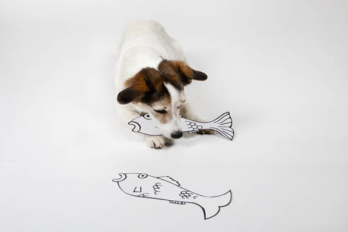Mongrel with drawn fishes on white ground - PSTF00434