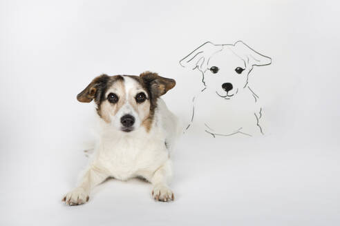 Portrait of mongrel with drawn look-alike lying on white ground - PSTF00467
