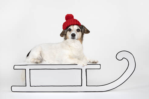 Portrait of mongrel wearing red woolly hat lying on drawn sledge - PSTF00470