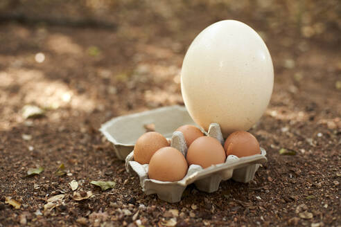 White and brown eggs in carton on land - VEG00406