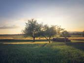 Apple trees in backlight - LVF08150