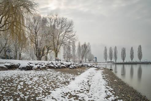 Deutschland, Baden-Württemberg, Bodensee, Uhldingen, Unteruhldingen, Winterliches Seeufer mit Pappelallee am Hafen - SHF02192
