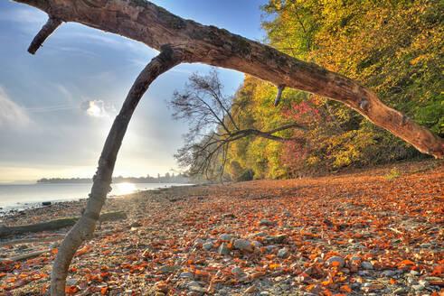 Deutschland, Baden-Württemberg, Bodensee, Wallhausen, Herbstlaub am Naturufer - SHF02207