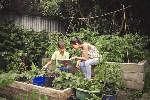 Mixed race children using digital tablet in garden - BLEF09703