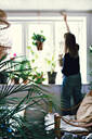 Rear view of female environmentalist hanging potted plant on window in room at home - MASF13244