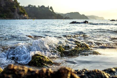 Küste bei Lloret de Mar, Costa Brava, Spanien - PUF01691